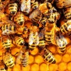 Продолжение истории с перевозкой пчел «Укрпочтой»
