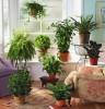 Покупаем семена комнатных цветов: как выбрать?